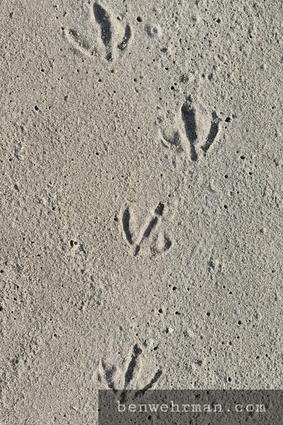 Seagull Footprints