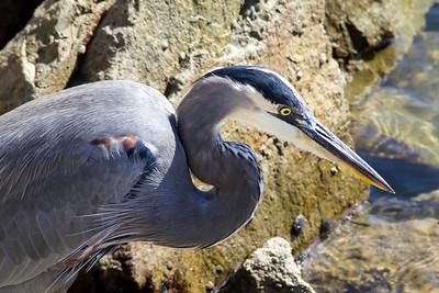 Coastal Birds & Waterfowl