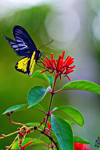 Cockrell_Butterfly_Center__D71_4780