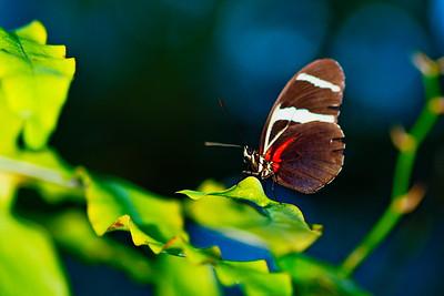 Cockrell_Butterfly_Center__D75_6728a