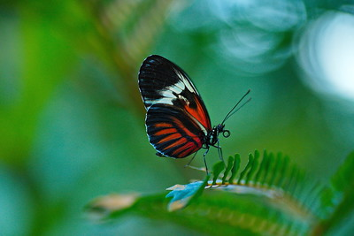 Cockrell_Butterfly_Center__D75_6722
