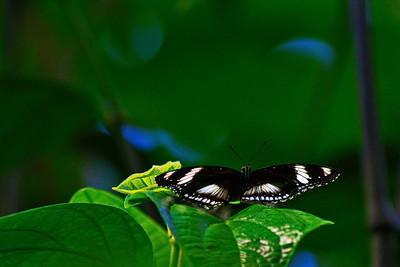 Cockrell_Butterfly_Center__D71_4794