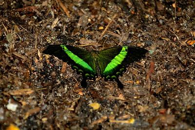Cockrell_Butterfly_Center__D71_4800