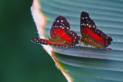 Cockrell_Butterfly_Center__D71_4784
