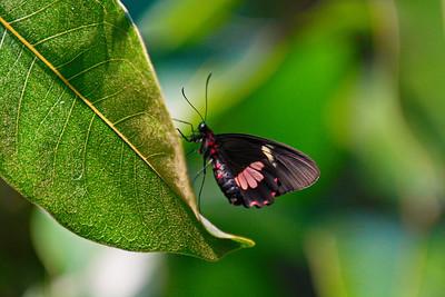 Cockrell_Butterfly_Center__D71_4793