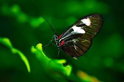 Cockrell_Butterfly_Center__D75_6737a