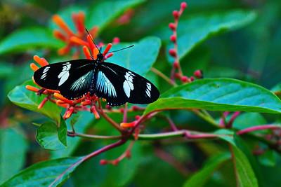 Cockrell_Butterfly_Center__D71_4811