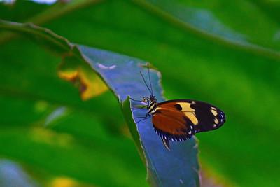 Cockrell_Butterfly_Center__D71_4827