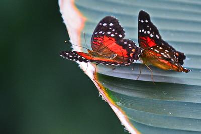 cockrell_Butterfly_Center__D71_4783