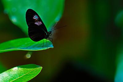 Cockrell_Butterfly_Center__D75_6755a