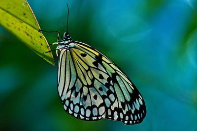 Cockrell_Butterfly_Center__D75_6749a