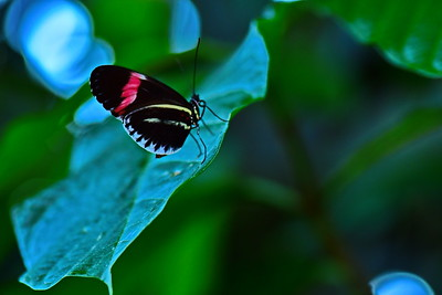 Cockrell_Butterfly_Center__D75_6757a