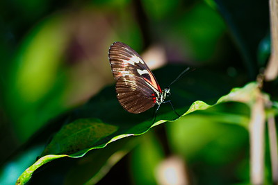 Cockrell_Butterfly_Center__D75_6729a
