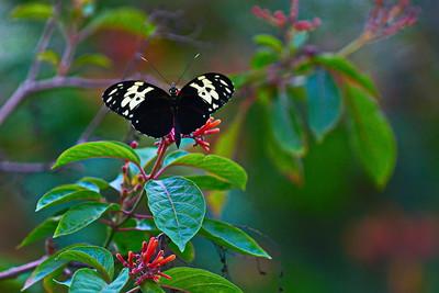 Cockrell_Butterfly_Center__D71_4803