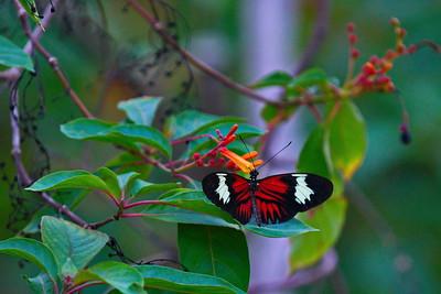 Cockrell_Butterfly_Center__D71_4809