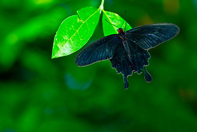 Cockrell_Butterfly_Center__D75_6725a