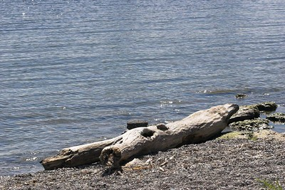 Log and lake