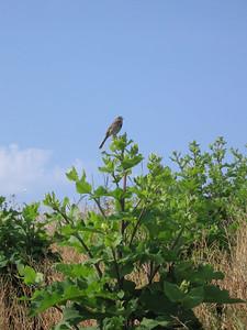 Bird and Burdock