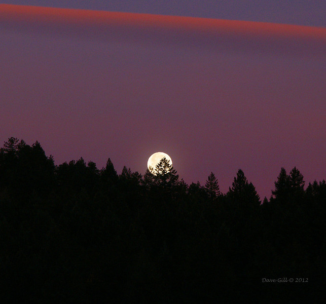 A setting full moon at first light.