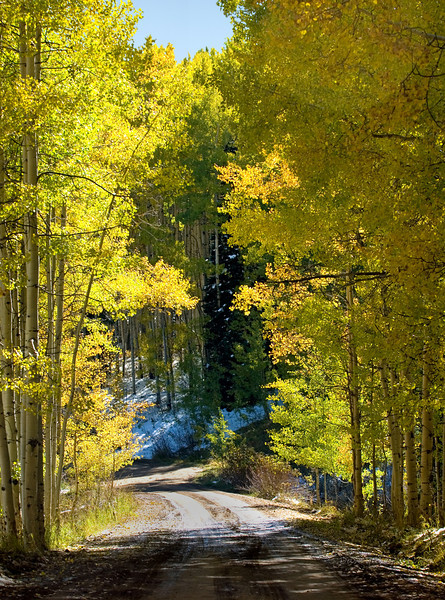 Fall Aspen along Ohio Pass Road.
