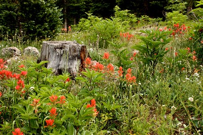 Colorado Wildflowers and Plants