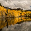 Changing leaves near Telluride, Colorado