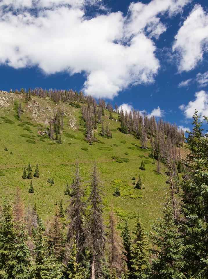 CDT Near Wolf Creek Pass