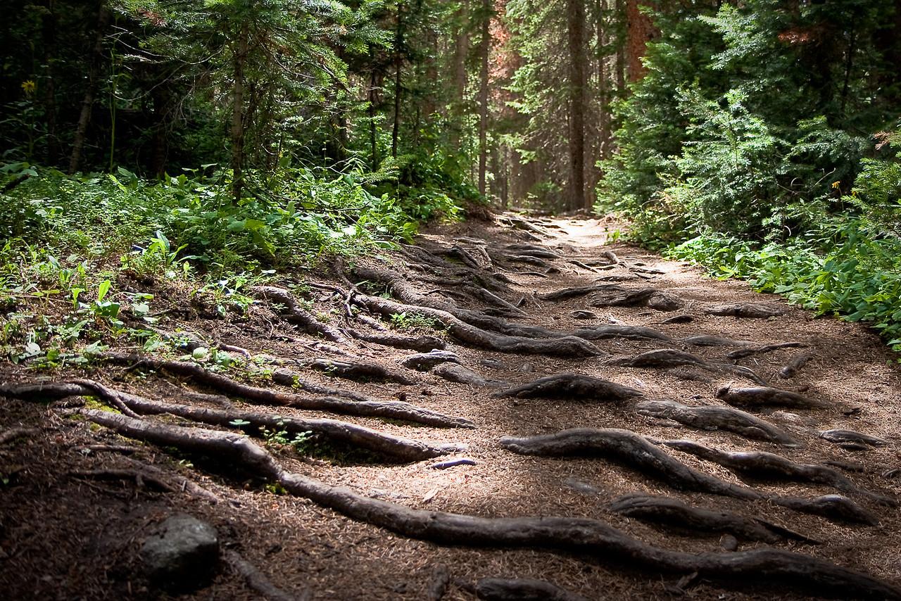 Spruce Creek Trail