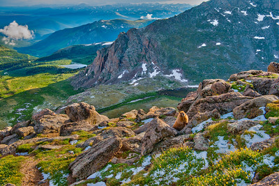 Marmot, Snow, and Rocks