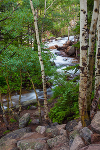 Stream and Aspens