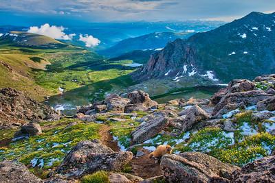 Marmot Climb