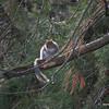 Squirrel - 2nd shot