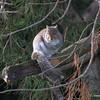 Squirrel - 4th shot