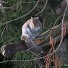 Squirrel 5th shot - sharpened