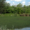 Blue lagoon Heron