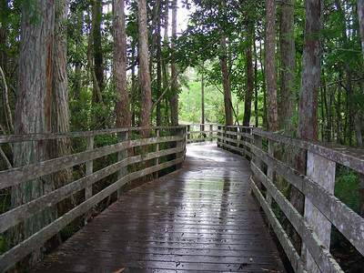 Elaborate boardwalk winds its way through Corkscrew Swamp Sanctuary. It is made of a sustainably grown and harvested wood from the Brazilian rainforest and needs liitle maintainance.