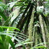 la selva walking palm