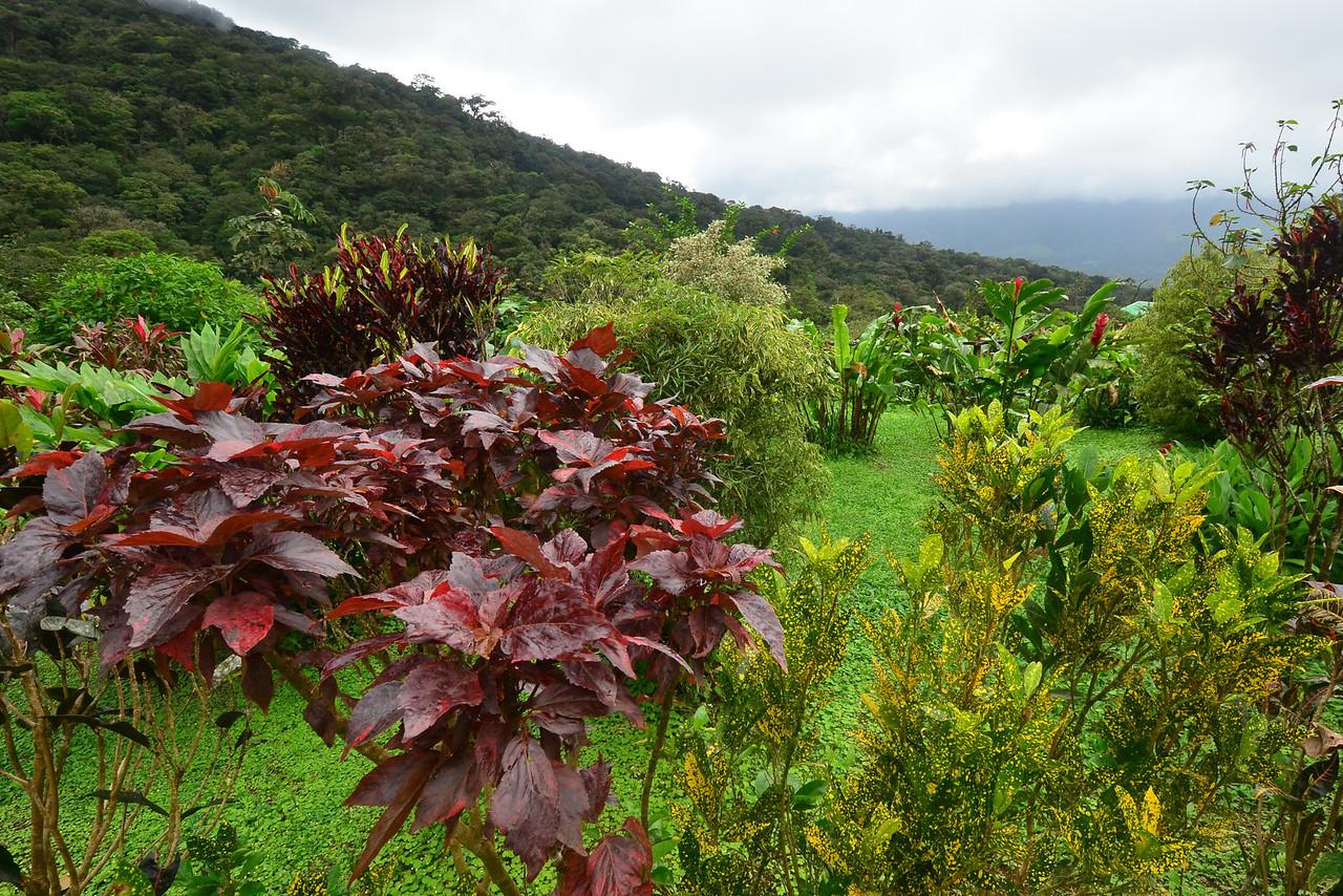 The garden of Celeste Mountain Lodge