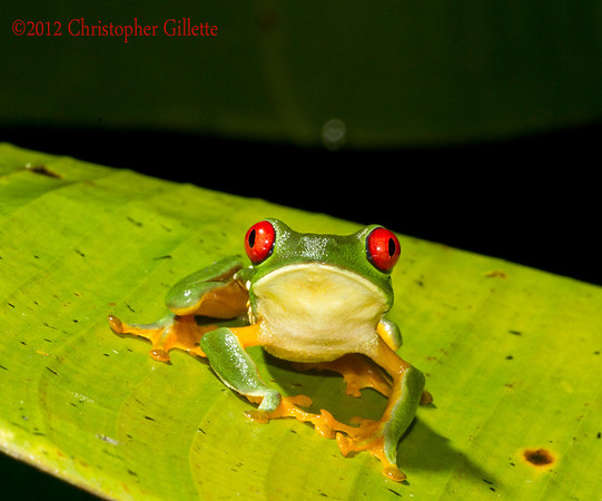 Costa Rica February  2012