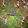 2014- whip scorpion- Turrialba- Dec 27 2013