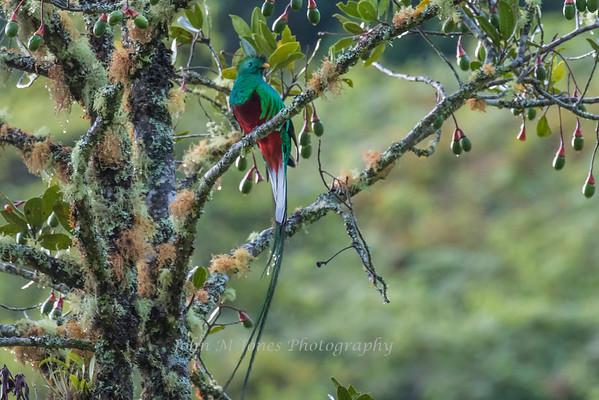 Costa Rica Nov 2015  - Savegre