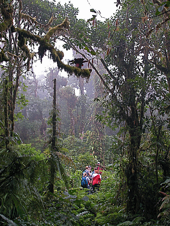 Ridge top trail, Alberto Manuel Brenes Biological Reserve, Costa Rica