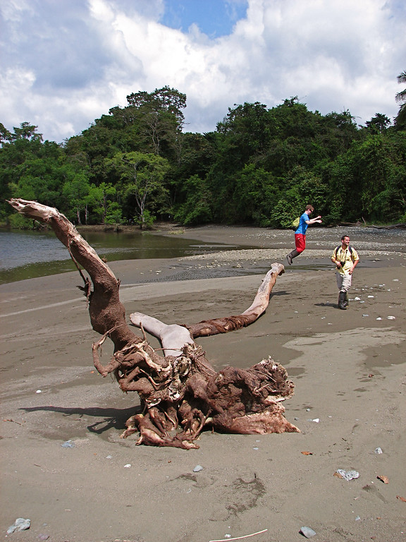 Students using a large driftwood log as a sprinboard, Corcovado National Park, Osa Peninsula, Costa Rica.