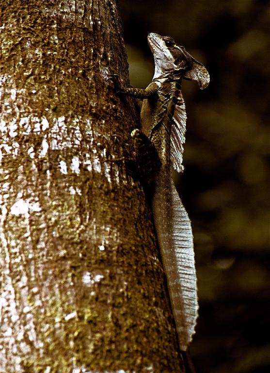 Basilisk on tree copy