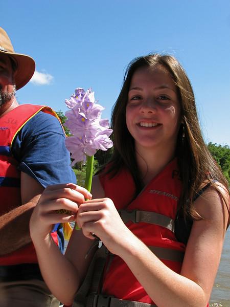 Water hyacinth flower, Sierpe River, Costa Rica