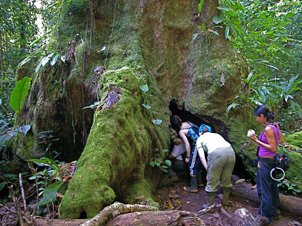 Students exploring the hollow bole of a large tree along the trail near San Pedrillo, Corcovado National Park, Costa Rica