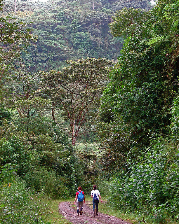 Walking downhill on the road leading out of Alberto Manuel Brenes Biological Reserve, Costa Rica.
