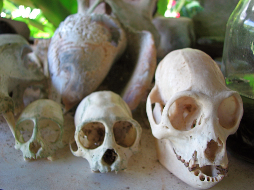 Monkey skulls, Corcovado National Park, Osa Peninsula, Costa Rica.