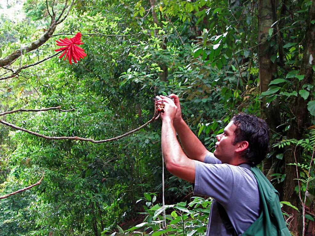 Pablo Gutierrez photographing the flower of an Erythrina shrub in Corcovado National Park, Costa Rica.