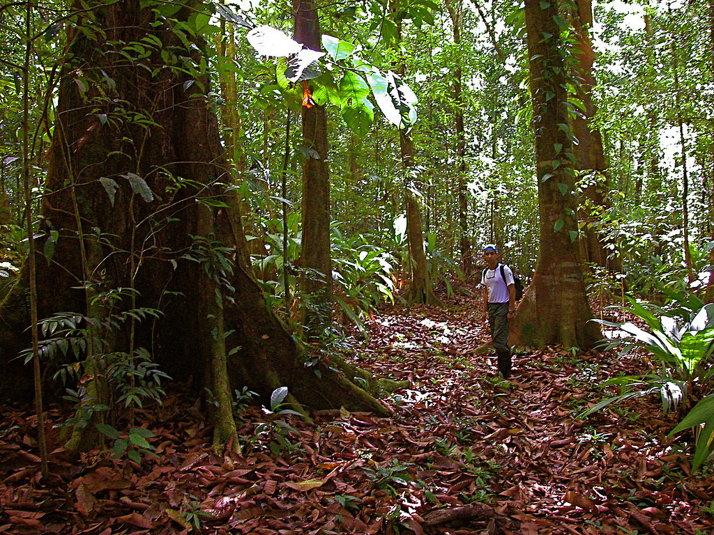 Oscar Rocha on the trail near Llorona, Corcovado National Park, Osa Peninsula, Costa Rica.  Hiiking toward San Pedrillo.